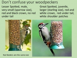 Dont confuse your woodpeckers